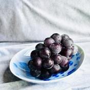 きみのブドウ (ジューシーな藤稔) 約1kg(2房) 果物(ぶどう) 通販