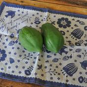 グリーンパパイヤ2キロ 約2キロ 果物や野菜などのお取り寄せ宅配食材通販産地直送アウル