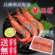送料無料 兵庫県浜坂産 冷凍甘エビ 子持ち 約30尾前後 魚介類 通販