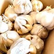 訳あり岩手のにんにくサイズいろいろ 1.3キロ 約15-30個 野菜(にんにく) 通販