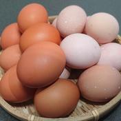 食べ比べセット 平飼い 元気玉+さくら玉【40個】 約2kg 卵(鶏卵) 通販