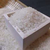 山形県産特別栽培米 コシヒカリ (精米)2kg 2kg 山形県 通販