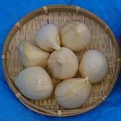 週末農家のジャンボにんにく 800g前後(30片前後) 野菜(にんにく) 通販