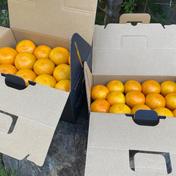 こだわりゆら早生みかん小玉2キロ 2キロ 果物や野菜などのお取り寄せ宅配食材通販産地直送アウル