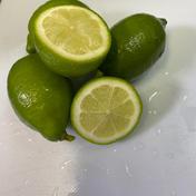国産グリーンレモン約2キロ 2kg マルユー園
