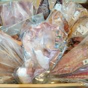 長崎漁港発 旬の地魚一夜干しお任せセット 約1.5kg 魚介類(セット・詰め合わせ) 通販