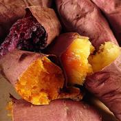 佐之衛門の焼き芋 1.5kg 茨城県 通販