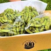 (予約商品)農薬等不使用 ぎゅっと詰まった採れたて丹波黒枝豆 1キロ 1キロ 野菜(豆類) 通販
