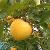 【訳あり】旬のりんご食べ比べ約3kg(ちょこっとキズ) 約3kg(8~12玉) キーワード: 訳あり 通販
