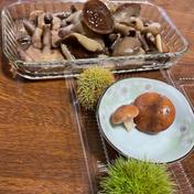 ハナイグチの塩漬け「ラクヨウ」 500g 秋田県 通販