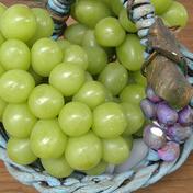 朝摘みシャインマスカット 2kg 果物(ぶどう) 通販