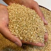 2021年新米❕キヌヒカリ(玄米) 10キロ 玄米 5kg×2袋 計10kg 果物や野菜などのお取り寄せ宅配食材通販産地直送アウル