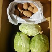 高原の新鮮野菜キャベツ・ジャガイモ キャベツ3個・ジャガイモ2㎏ 果物や野菜などのお取り寄せ宅配食材通販産地直送アウル