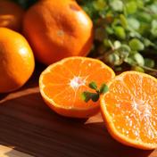 松兵衛みかん2kg(お試し用) 2kg 果物や野菜などのお取り寄せ宅配食材通販産地直送アウル