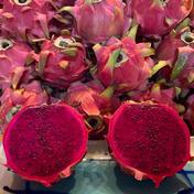 新入荷【国産・夏季限定】喜界島産ドラゴンフルーツ(赤)レッドピタヤ 約1.5kg(4〜6個程度) OWL配送(冷蔵) 4〜6個程度(約1.5kg) 果物(その他果物) 通販