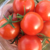 ハチが交配した完熟ミニトマト 1キロ 1キロ 野菜(トマト) 通販