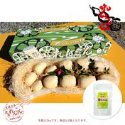 武井のれんこん 2kg + 粉れんこん(れんこんパウダー)1袋(100g)セット れんこん 2kg 粉れんこん 100g 野菜(蓮根) 通販