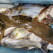 鏡の漁師の魚達! 大漁鮮魚BOX! 約5キロ 魚介類(セット・詰め合わせ) 通販