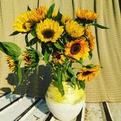 8番目のゴッホのひまわり ひまわり15本 8番目のひまわりオリジナル花器 京都府 通販