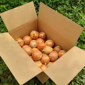 農薬を使わず育てた『子育て農家の玉ねぎ』10㎏箱 玉ねぎ 10㎏ 野菜(玉ねぎ) 通販