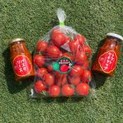 樹完熟!甘うまトマト堪能セット~♪ トマト1kg、トマトソース2本 果物や野菜などのお取り寄せ宅配食材通販産地直送アウル