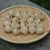 ホワイト六片種にんにくL玉2kg 2kg 果物や野菜などのお取り寄せ宅配食材通販産地直送アウル