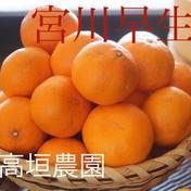宮川早生10k家庭用 10k 果物や野菜などのお取り寄せ宅配食材通販産地直送アウル