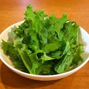 リーフレタス400g リーフレタス400g 野菜(レタス) 通販