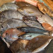 長崎近海産旬の地魚お任せ詰め合わせ 3kg 魚介類(セット・詰め合わせ) 通販