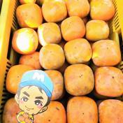 和歌山県紀の川市産 まーくん家のたねなし柿 箱込み5キロ箱 果物(柿) 通販