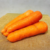 【宮崎県綾町産】甘くて美味しい人参!【農薬・化学肥料不使用】 10kg 野菜(人参) 通販
