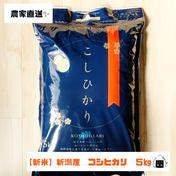 【新米できました!】R3年産 新潟県産コシヒカリ(5kg) 5kg 米 通販