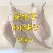 【福岡産】わけあり、安納芋ゴロゴロ2キロ 加工用、スイーツの素材に 2キロ 福岡県 通販