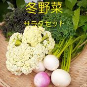 冬野菜サラダセット80サイズ 2㎏以内 群馬県 通販