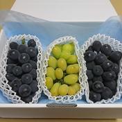 再々販【3種食べ比べ】 石鎚山の恵みBOX 1.5㎏ 果物(ぶどう) 通販