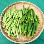 緑オクラと白オクラ詰め合わせ 合わせて1kg 果物や野菜などのお取り寄せ宅配食材通販産地直送アウル