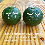 【訳あり】これで最後!幻の柑橘「へべす(露地物)」2kg 2kg 果物や野菜などのお取り寄せ宅配食材通販産地直送アウル