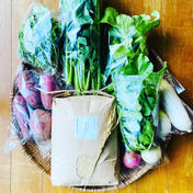 白米5キロ&おまかせ野菜セット 10キロ ポカラカファーム
