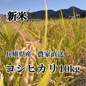 田中さんちのお米やさん 新米 令和3年度 兵庫県産コシヒカリ 10kg 精米 10kg