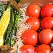 夏のコラボ!スイートコーン&A品トマト あまいバンダムDXの3L〜2Lを中心に3〜4本&トマト 2キロ前後10個〜12個 ※サイズにより前後します。 野菜(とうもろこし) 通販