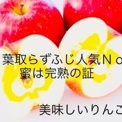 一番人気 葉取らず完熟ふじご家庭用約5キロ 約5キロ(14〜23玉) 果物や野菜などのお取り寄せ宅配食材通販産地直送アウル