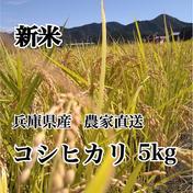 田中さんちのお米やさん 新米 令和3年度 兵庫県産コシヒカリ 5kg 精米 送料込 5kg