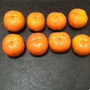 きよキヨ農園 早秋柿 約2キロ 果物(柿) 通販