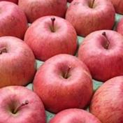 特別栽培りんご【ご家庭用】サンふじ5キロ(13〜20玉) 5キロ 果物や野菜などのお取り寄せ宅配食材通販産地直送アウル