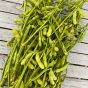 新鮮な枝豆を食べてみよう!五味農園の枝付き枝豆 箱を含めて約1.5kg程 野菜(豆類) 通販