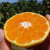 魚介系有機肥料にこだわった和歌山有田みかん2kgご家庭用 2kg 果物(みかん) 通販