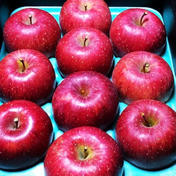 樹上完熟 太陽をたっぷり浴びた特選サンふじギフト約3キロ 約3キロ 果物 通販