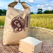 のぐちファーム安曇野産☆新米☆特別栽培米 令和3年コシヒカリ5kg 5kg のぐちファーム