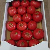 ひろちゃん野菜の訳ありトマト 約4キロ 野菜(トマト) 通販