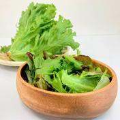 植物工場産 農薬:栽培期間中不使用 フリルレタス 約100g×4袋 埼玉県 通販